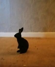 Black Rabbit (NOW SOLD)