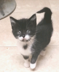 Gorgeous furry kittens *Collection or delivery*