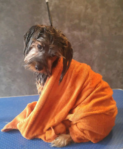 Dog grooming in a loving home