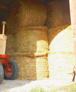 Horse hay and straw for sale.