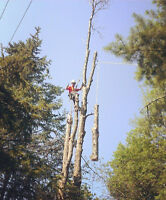 ** COMPLETE TREE SERVICES ** FREE ESTIMATES ** BEST RATE