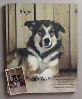 Your pet photo to canvas!