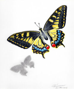 Signed Swallowtail Butterfly Coloured Pencil Drawing Print