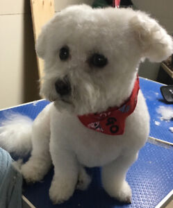 In Home, Affordable,Positive, Boutique Style Dog Grooming