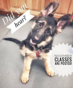Dog training classes at The Dog Classroom now posted!