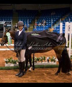 Fantastic/ Super honest Large Pony to lease
