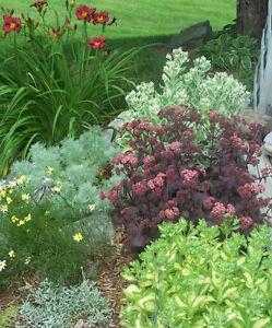 PLANTS FOR SALE - Most of over 480 varieties NOW $1.00 to $3.50