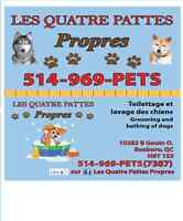 DOG GROOMING OPEN EVERY DAY
