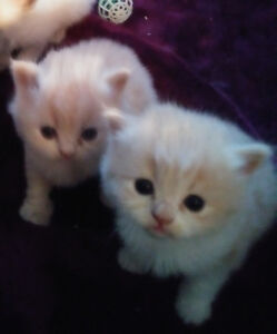 kittens ready to Re-Home on April 21st