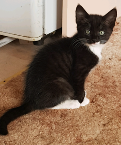 Female kittens free to good home
