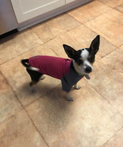Marty Adoption PENDING - Homes for Paws Dog Rescue