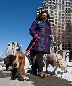 ile des soeurs nuns island dog board catcare pension chien amour