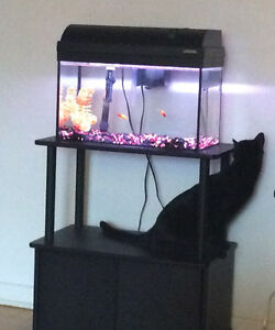 10 GALLON TANK+STAND+ACCESSORIES