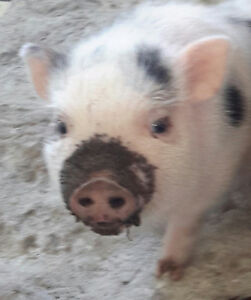 Your unwanted items for a farm sanctuary yardsale