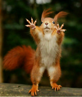 GUARANTEED Raccoon Squirrel Skunk Bird Wildlife Pest Removal