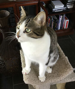 Neutered 3-year-old Male Cat - FREE