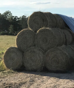 1st cut hay forsale