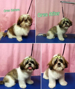 Dog grooming kijiji in mississauga peel region buy sell dog groomer working from home 10 years experience solutioingenieria Choice Image