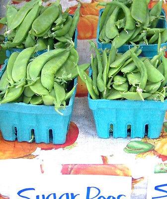 pea, OREGON SUGAR POD, snow, 33 seeds! GroCo US USA# Snow Pea Seeds