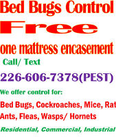 Pest Control Services – Stratford