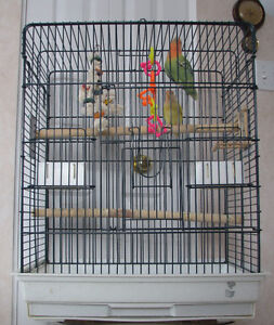 A pair of the lovebirds with big cage