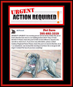 Looking for Stolen Dog