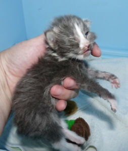 Did you find a kitten or baby animal that needs help?