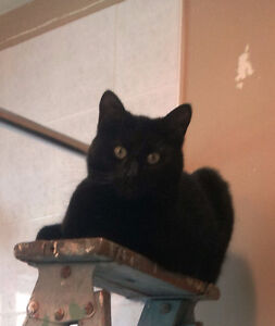 Missing Black Short Haired Neutered Male Cat, Hammond River Road