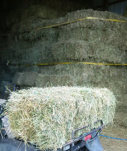 hay - small square bales - fort frances, ON area