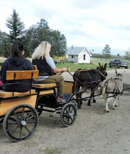 Driving Donkeys, Learn to drive horses and ponies lessons