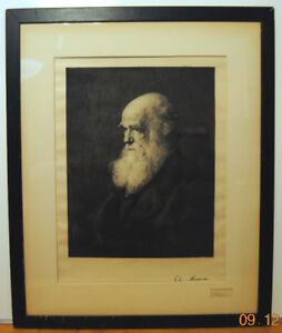 Rare Original 1881 Charles Darwin Large Signed Steel Engraving