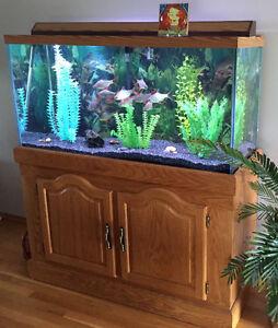 Fish Tank with Tinfoil Barbs