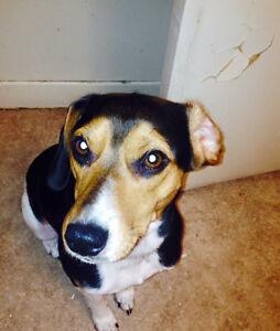 Free dog to good home London Ontario image 4