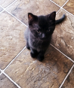 8 week old kitten ready for rehoming
