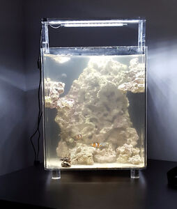 Salt Water Tank With Clown Fish/ Coral