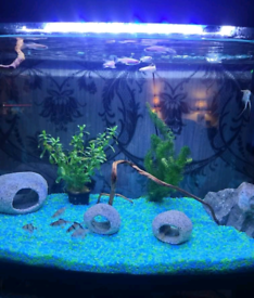 Fully decorated cycled fish tank
