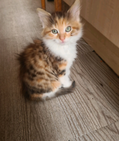3 Sweet Kittens Looking for a new loving home
