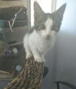Kitten Needing a new family to love him.