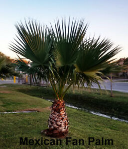 Tropical plants (Palms and Agaves)