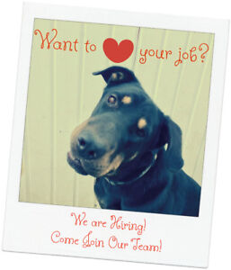 Hiring: Dog Daycare Attendant