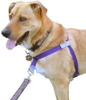 """""""Walk Your Dog With Love"""" Dog Harness"""