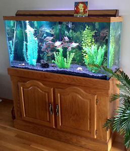 Fish Tank with Tinfoil Barbs