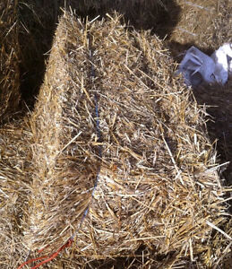 For sale: Square straw bales locally grown naturally ripened
