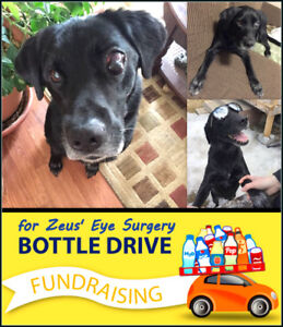 BOTTLE Drive for Zeus!  Quispamsis- Rothesay