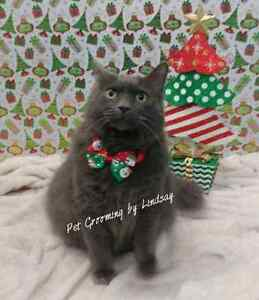 January Special ! Professional dog and cat grooming  Cambridge Kitchener Area image 8