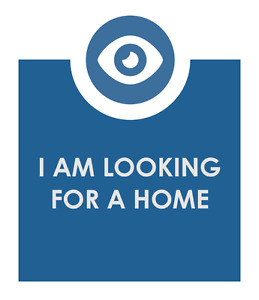 LOOKING FOR A NEW HOME IN THE NORTH END