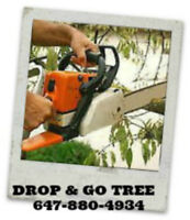 Drop and Go tree removal 20 to 30 feet. 647-880-4934