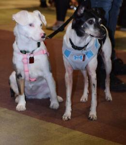 **Adorable Benji & Della are available for adoption***
