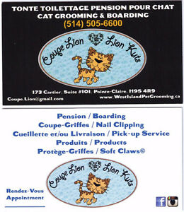 COUPE LION / LION KUTS SALON