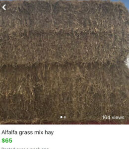 Alfalfa grass mix  hay